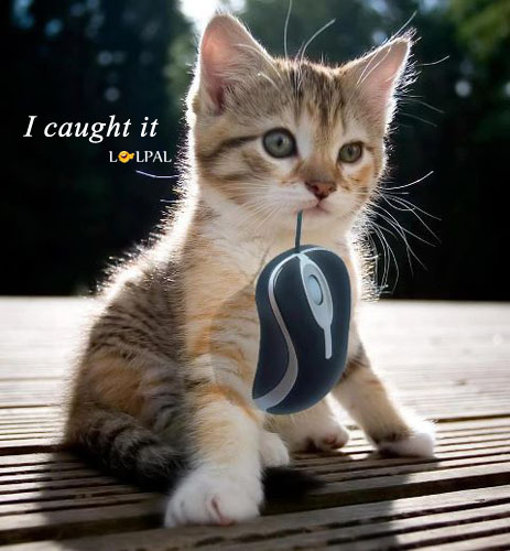 I Caught the Mouse!